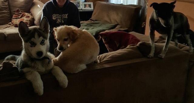 1st Time Husky Owner 20160411