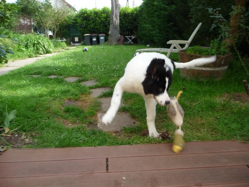 photos de vos chiens au naturel - Page 10 P1010916