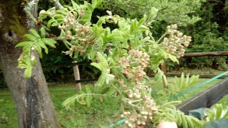 un arbre près de chez moi Dsc_0014