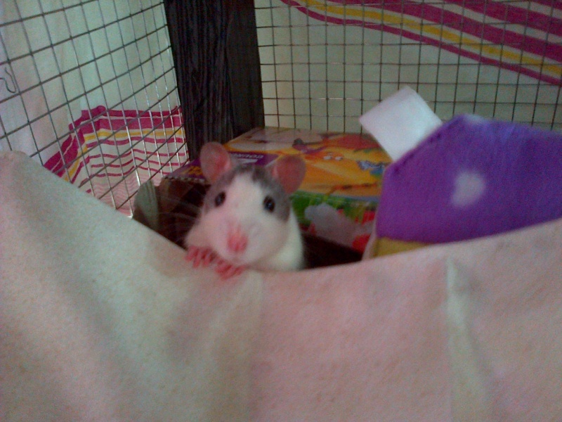 Mes ratoux Img-2012