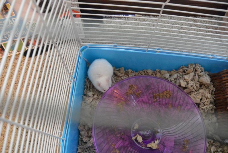 Meet Cotton! Dsc_1210