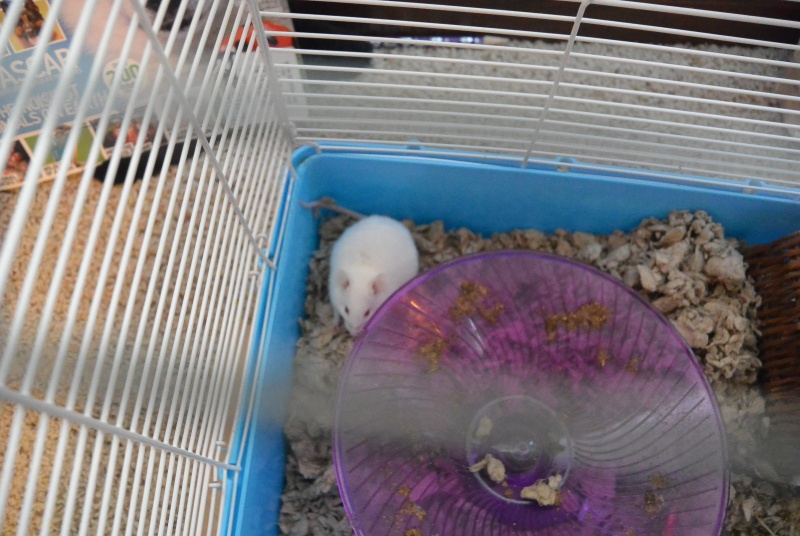 Meet Cotton! Dsc_1211