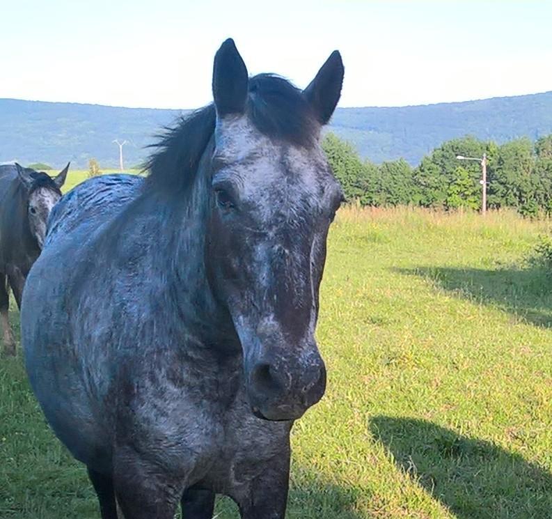 DIVA - OI Appaloosa née en 1991 - adoptée en octobre 2017 par Yves 13267910