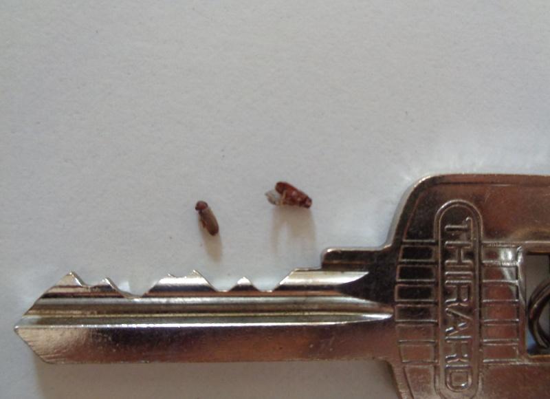Insectes du bois qui piquent, comment m'en débarrasser Bete_b17