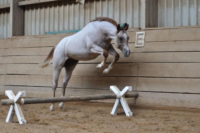 HQV : Chevaux du Club Horse_11