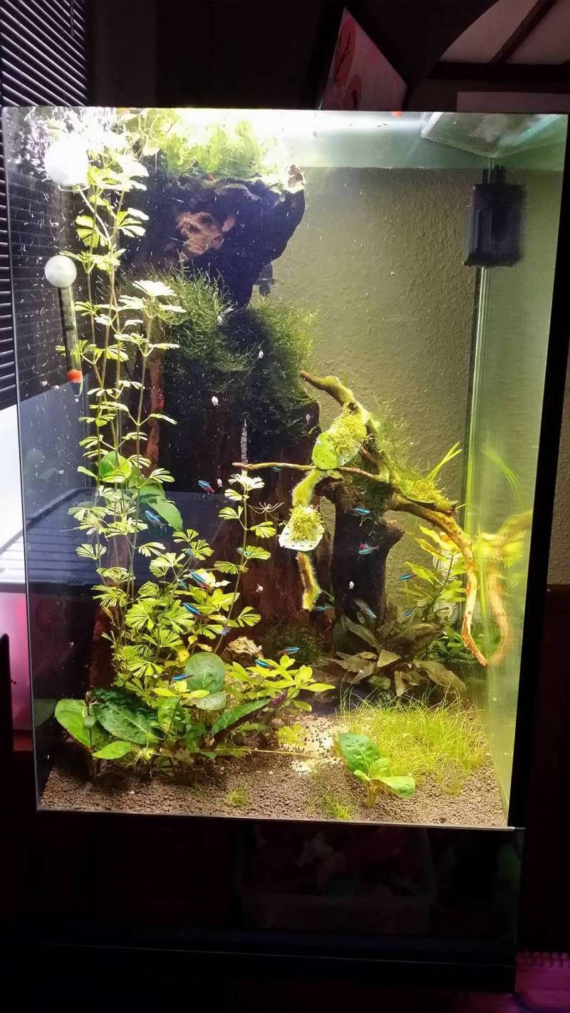 aquarium carré et très profond  13340410