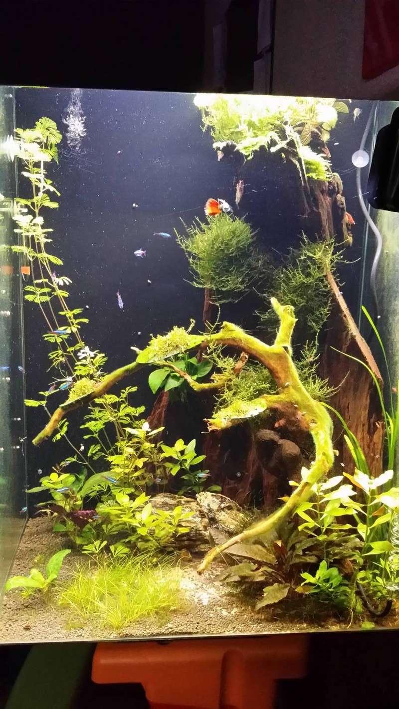 aquarium carré et très profond  13389310