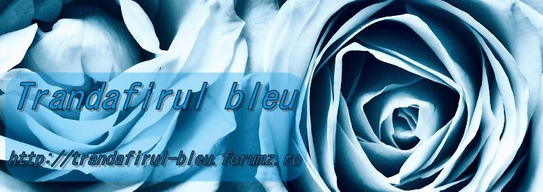 Ne mutam pe Trandafirul Bleu 83411