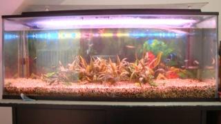 Une Fishroom ! 41211
