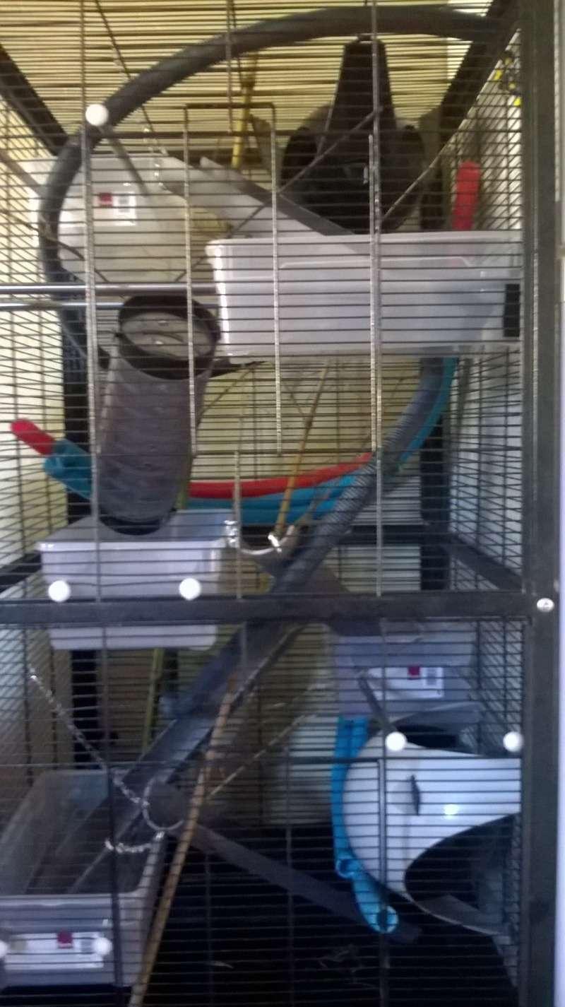 Amenagement de la cage grace à vos conseils Wp_20112