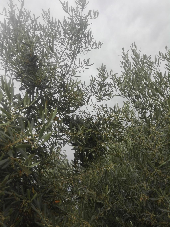 ¿En este mes de Junio qué tipo de abono N aportar? (Albacete) Img_2020