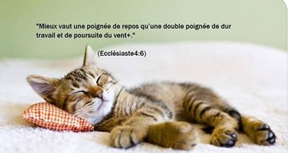 citation du jour - Page 20 Chat10