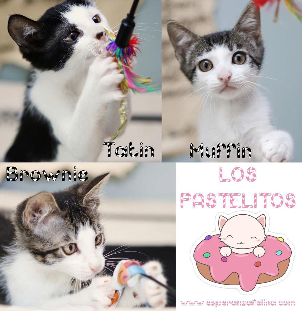 *Muffin y Tatín (Pastelitos). Cachorritos supermimosos buscan familia. Álava (F.N. aprox: 12/05/2018) Pastel10