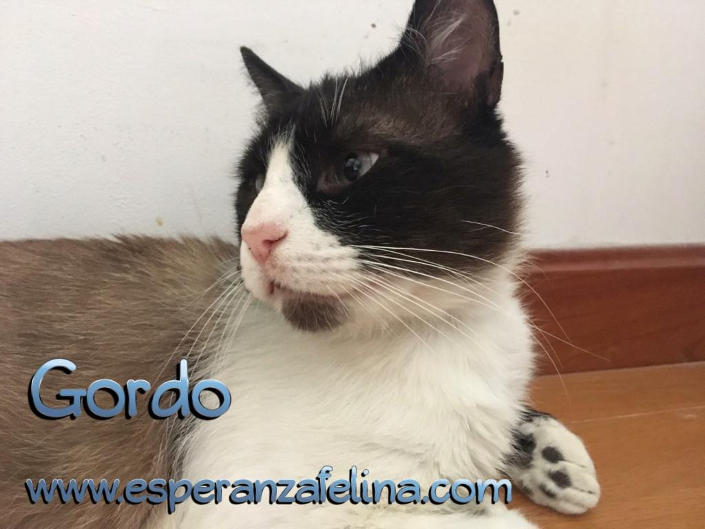 Gordo, gato bonachón en adopción (edad aprox. 3años)  Photos12