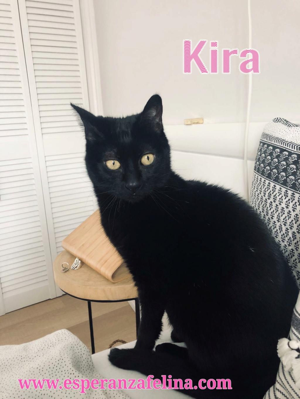 Kira, panterita en adopción (F.N. 25-07-10) Photos13