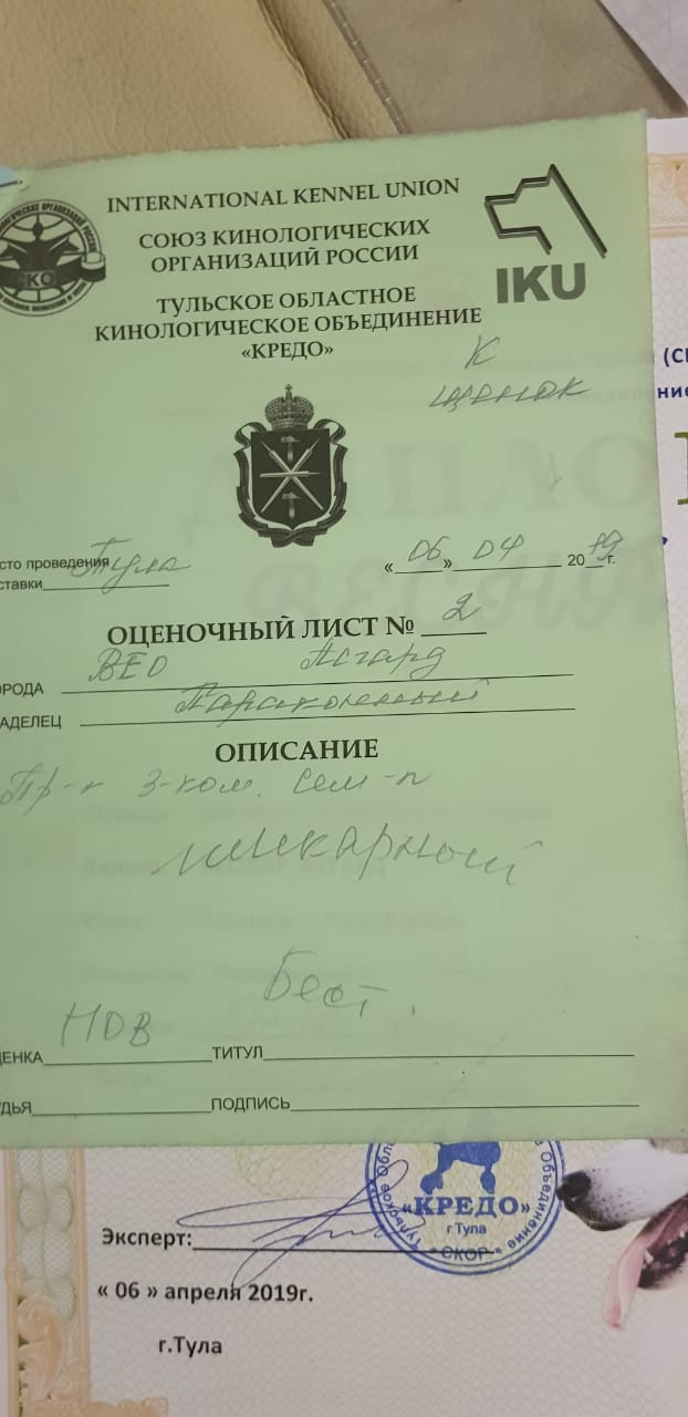 ВОСТОЧНО-ЕВРОПЕЙСКАЯ ОВЧАРКА ВЕОЛАР  АСГАРД Img-2018