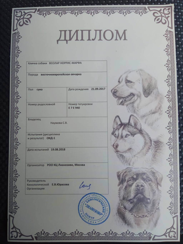 ВОСТОЧНО-ЕВРОПЕЙСКАЯ ОВЧАРКА ВЕОЛАР НОРРИС-МАРФА Img_2015