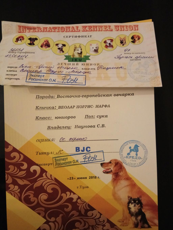 ВОСТОЧНО-ЕВРОПЕЙСКАЯ ОВЧАРКА ВЕОЛАР НОРРИС-МАРФА Img_2036
