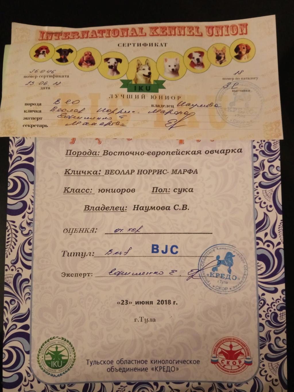 ВОСТОЧНО-ЕВРОПЕЙСКАЯ ОВЧАРКА ВЕОЛАР НОРРИС-МАРФА Img_2040