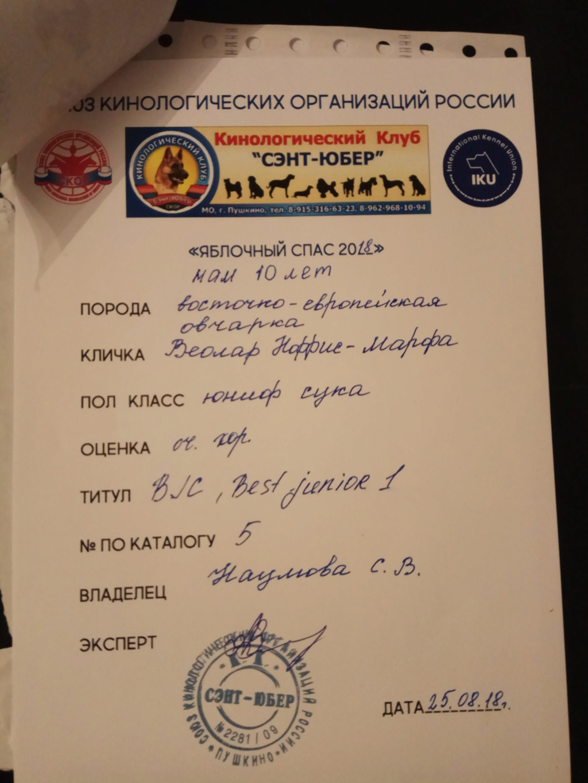 ВОСТОЧНО-ЕВРОПЕЙСКАЯ ОВЧАРКА ВЕОЛАР НОРРИС-МАРФА Img_2041