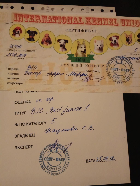 ВОСТОЧНО-ЕВРОПЕЙСКАЯ ОВЧАРКА ВЕОЛАР НОРРИС-МАРФА Img_2042