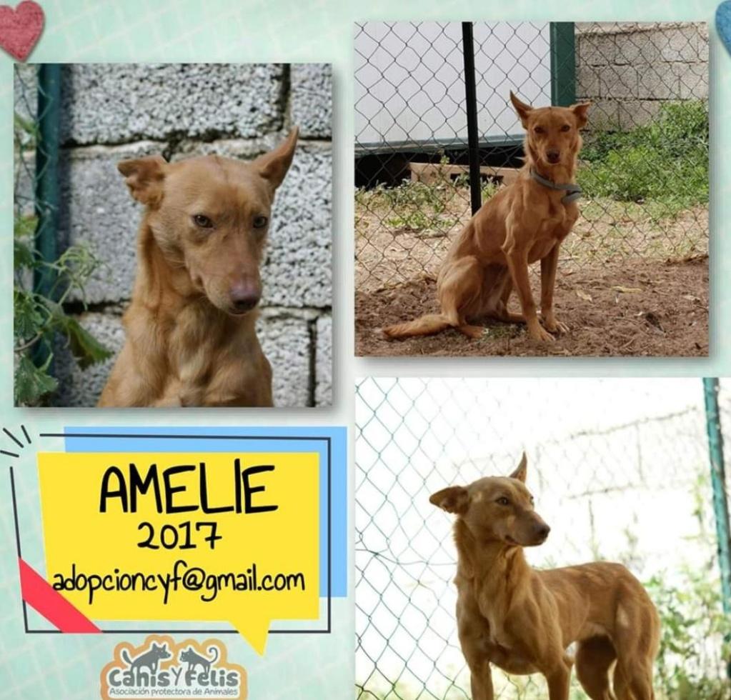 Azafrán y Amelie buscan una nueva familia Img-2353