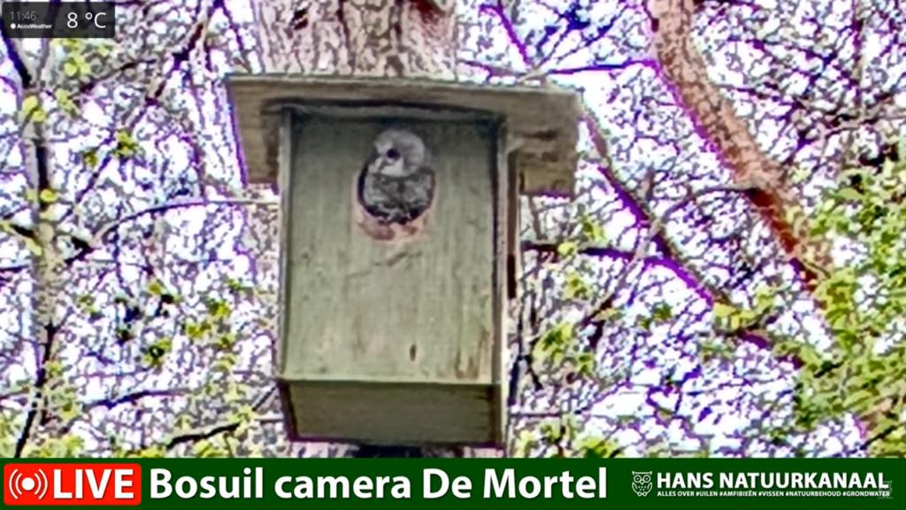 Bosuil de Mortel 2021 - Pagina 5 0129