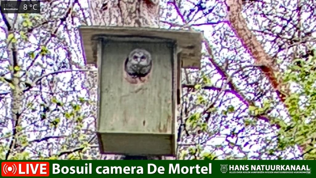 Bosuil de Mortel 2021 - Pagina 5 0228