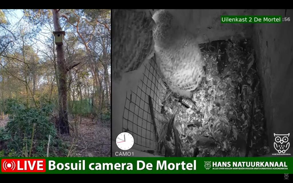 Bosuil de Mortel 2021 - Pagina 5 0328