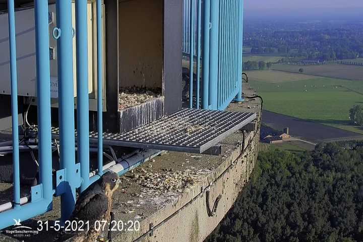 campics vanaf takkelingen © VWGGemert/VBN - Pagina 4 0448