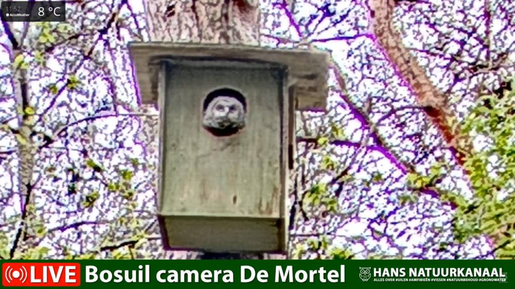 Bosuil de Mortel 2021 - Pagina 5 0527