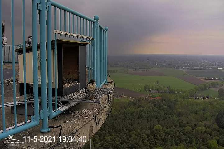 campics vanaf pip/ hatch 1e kuiken © VWGGemert/VBN - Pagina 32 0734
