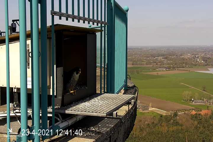 campics vanaf pip/ hatch 1e kuiken © VWGGemert/VBN - Pagina 4 0819