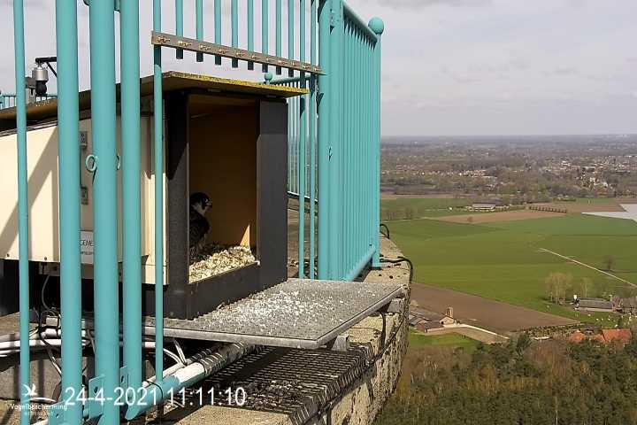 campics vanaf pip/ hatch 1e kuiken © VWGGemert/VBN - Pagina 6 1020
