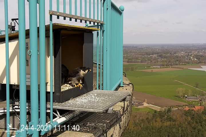 campics vanaf pip/ hatch 1e kuiken © VWGGemert/VBN - Pagina 6 1120