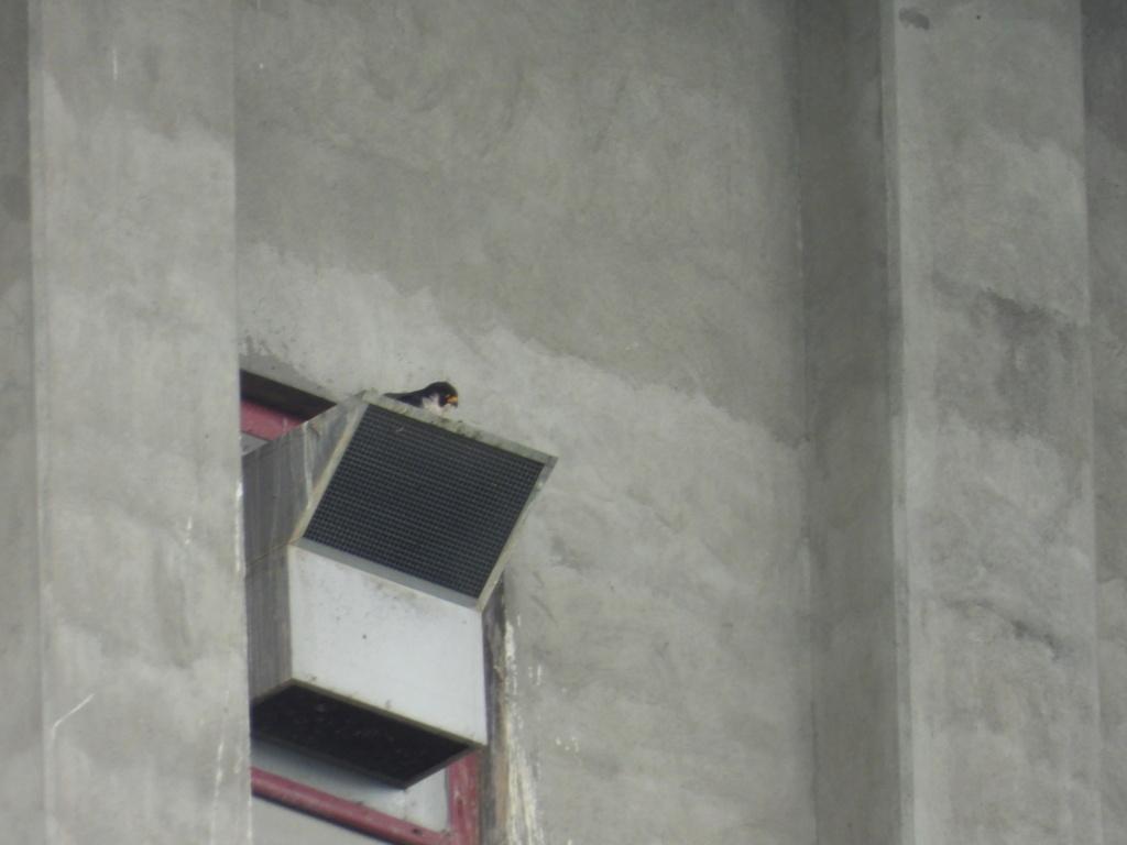 Rondom de toren - Pagina 21 Dscn2815