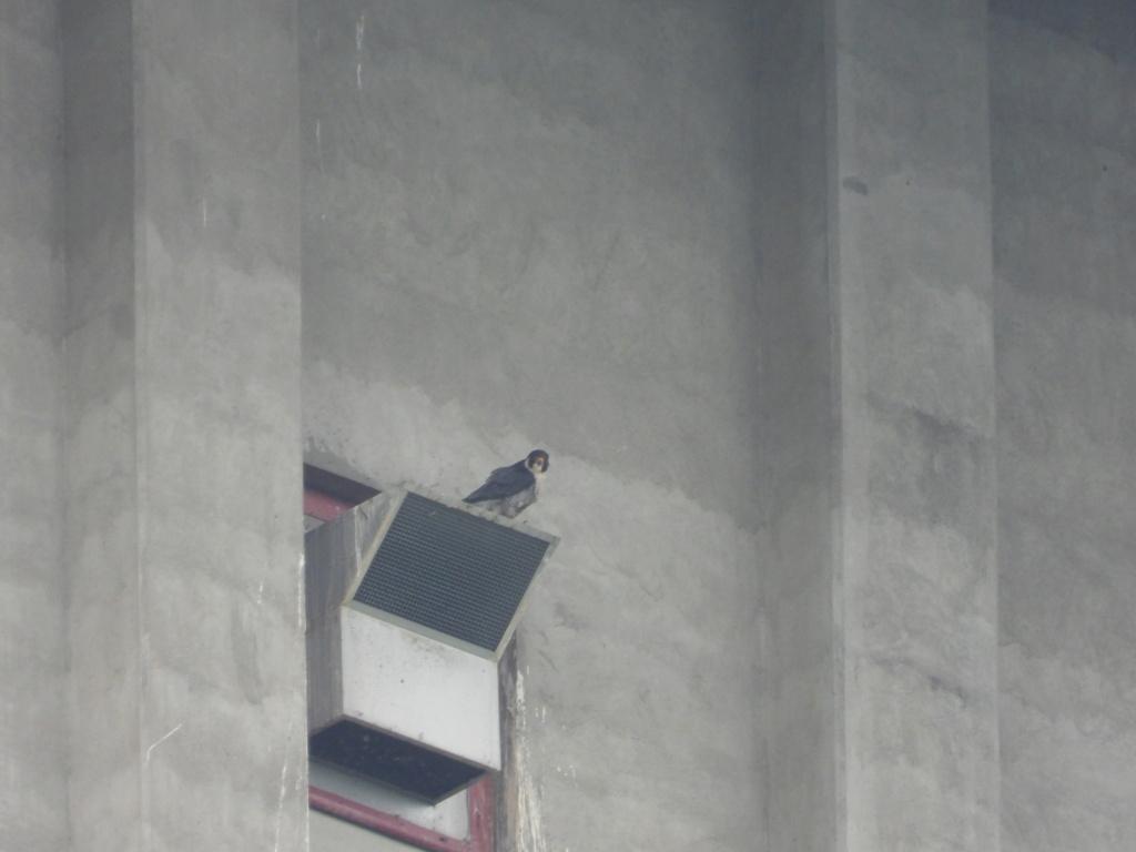 Rondom de toren - Pagina 21 Dscn3413