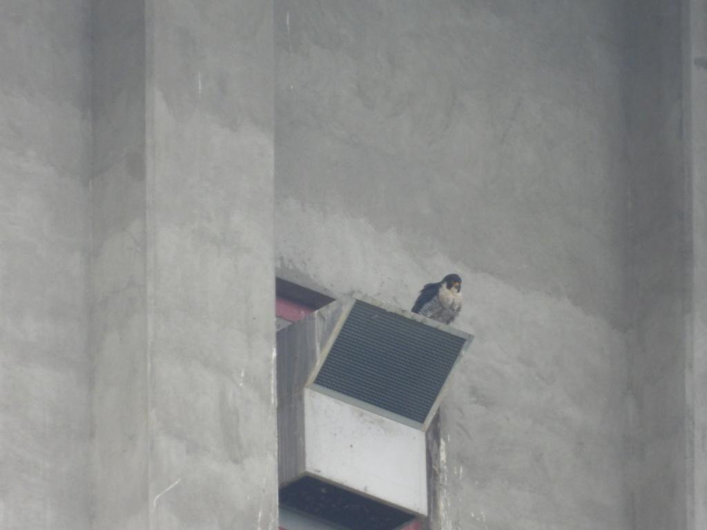 Rondom de toren - Pagina 21 Dscn3414