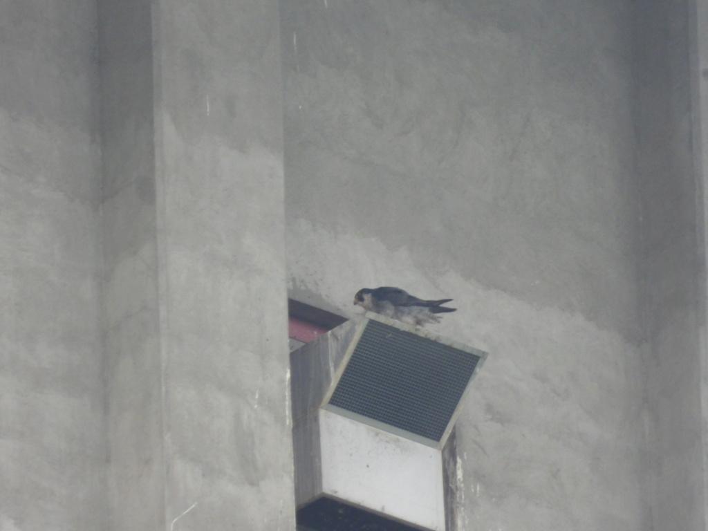 Rondom de toren - Pagina 21 Dscn3415