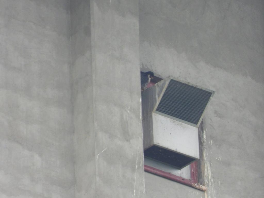 Rondom de toren - Pagina 21 Dscn3416