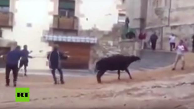 Una vaquilla brama de miedo y dolor durante unas fiestas populares de España