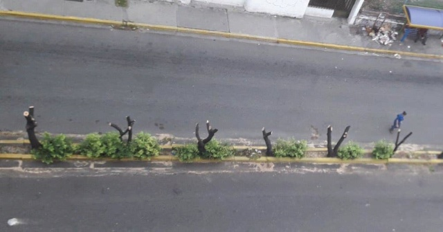 Indignación en Valera por atroz e indebida poda de árboles por parte de Alcaldía