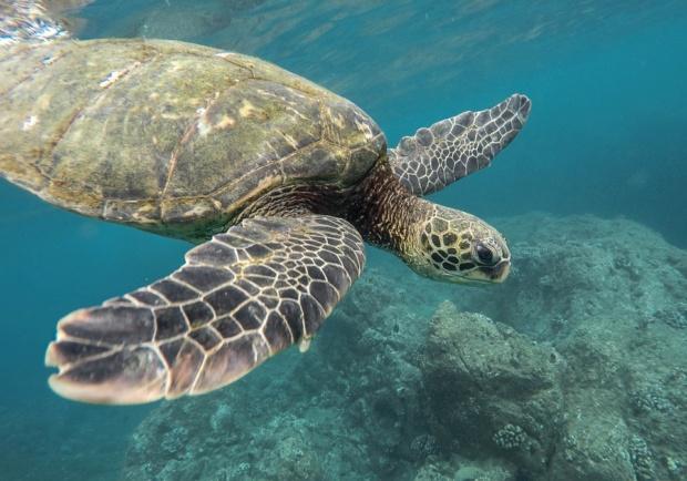 (Vídeo) Hallan al menos 300 tortugas muertas, atrapadas en redes de pesca en México Animal12