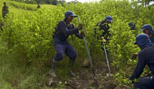 Cultivos Ilícitos en Colombia
