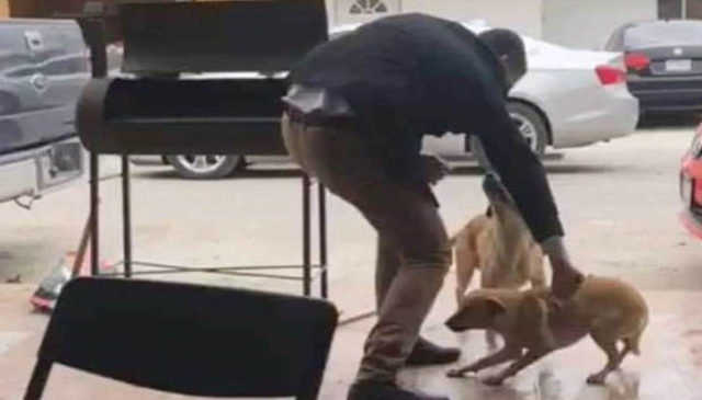 Hombre en México mata a perro de cuchillazo