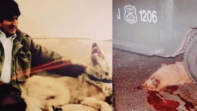 Militares golpistas asesinan a perro de Evo Morales