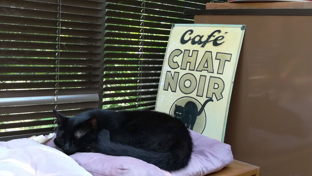 j ' adore mon chat !!! - Page 15 Img_2017