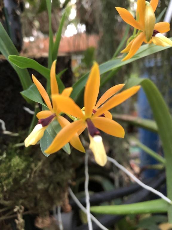 Identification orchidée 0face510