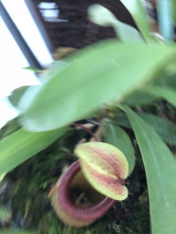 Escargots sur plantes montées 61d9a710