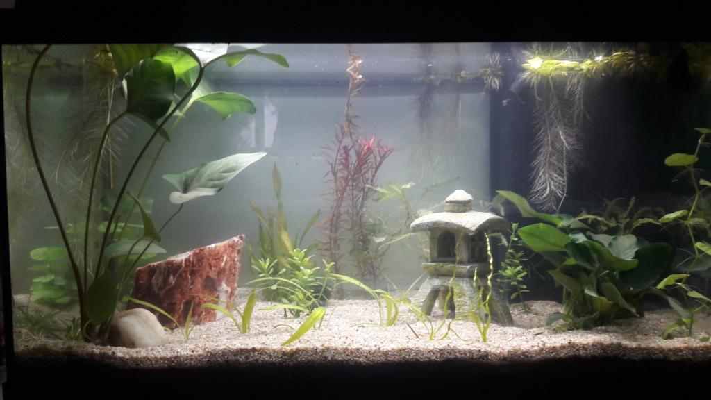 conseil pour l'eau de notre nouvel aquarium 20190112